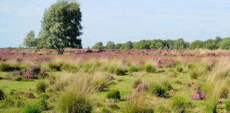 Natuurgebieden van Nederland